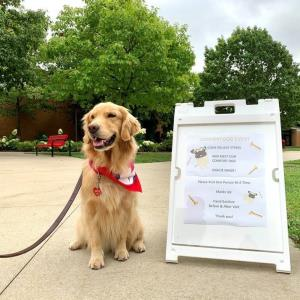 Comfort Dog On Campus: Gracie Maize